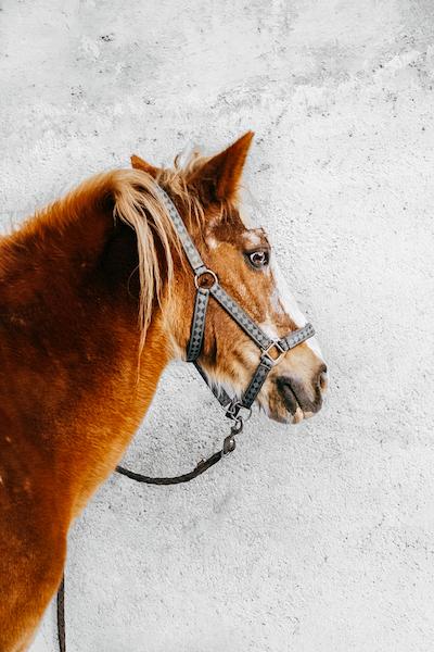 Cavallo Equitazione