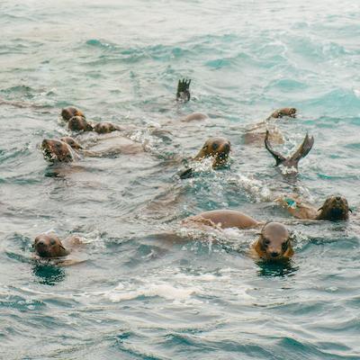 Wildlife Coast Cruises Phillip Island Foche Australia Seals Victoria